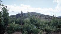 Agricoltura, in vendita 16mila ettari con un valore minimo 255 mln