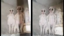 Aliens or Baby Owls? Man Shocked after Spotting Spooky-Looking Creatures in Attic