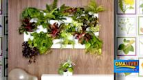Indoor Gardens to Clean Your Air and Heal Your Soul
