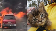 Firefighters rescue tiny kitten after car goes up in flames