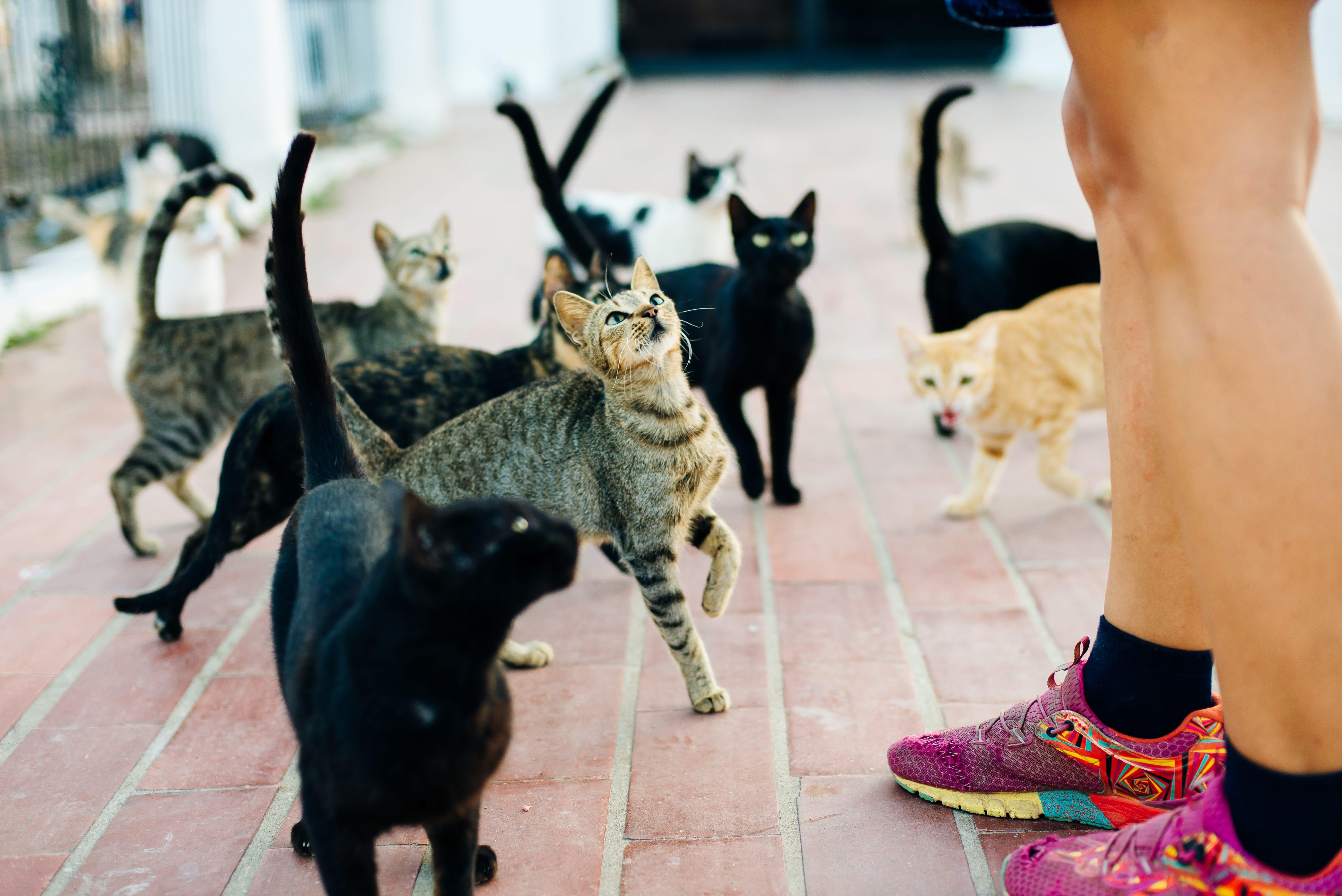 United States elderly lady given jail time for feeding cats