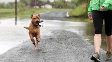 Explicando las razones tras el estudio que asegura que los dueños de los perros viven más