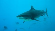 Sharks are eating British songbirds, scientists find