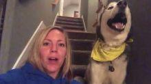 Howling Husky Says 'I Love You'