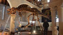"""Mise aux enchères de Stan le T. Rex par Christie's à New York : """"Il est exceptionnel mais il n'est pas unique"""" , juge un paléontologue"""