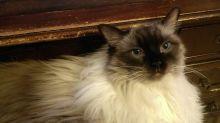 Cat death rise: 'It feels like we've lost a family member'