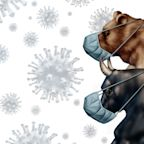 Dow Jones Rallies 700 Points As Coronavirus Outbreak Shows Signs Of Slowing