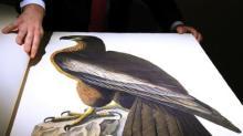 """Primeira edição de clássico """"Os Pássaros da América"""" pode render US$12 milhões em leilão"""
