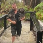 Flash Flooding at Australian Zoo Prompts Dramatic Koala Rescues as Fires Continue to Burn