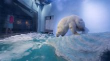 Polar bear in Chinese mall showing signs of 'mental decline': animal rights groups