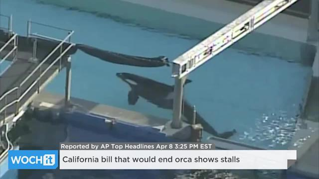 California Bill That Would End Orca Shows Stalls
