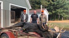 The 2020 New Brunswick moose hunt was a record breaker
