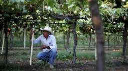 California lawmakers send governor bill authorizing farmworker overtime