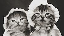 17 Vintage Cat Photos You Won't Believe Actually Exist