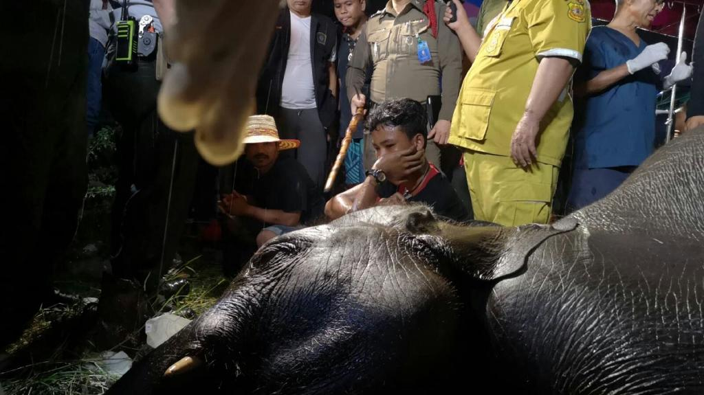 The mahout (C) of 10-year-old elephant named 'Lucky', wildlife volunteers and police surround the animal's body in Samut Prakhan province, south of Bangkok, in a photo taken by civilian volunteer charity Ruamkatanyu on September 14, 2018