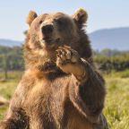 Dow Jones Dips, Nasdaq Dives; Fed Official Makes Inflation Pledge; Bears Maul Tech Stocks