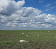 Sudden Death of 200,000 Saiga Antelopes Tied to Horrifying Killer Bacteria That Scientists Can't Explain