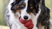 El juguete que encantará y tranquilizará a tu perro, según miles de dueños que lo han probado