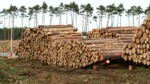 Tesla resumes tree cutting in Germany to build Gigafactory