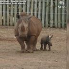 Zoo welcomes new baby white rhino