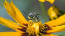 What The Health?! Were bees really living in a woman's eye? Canadian experts doubtful