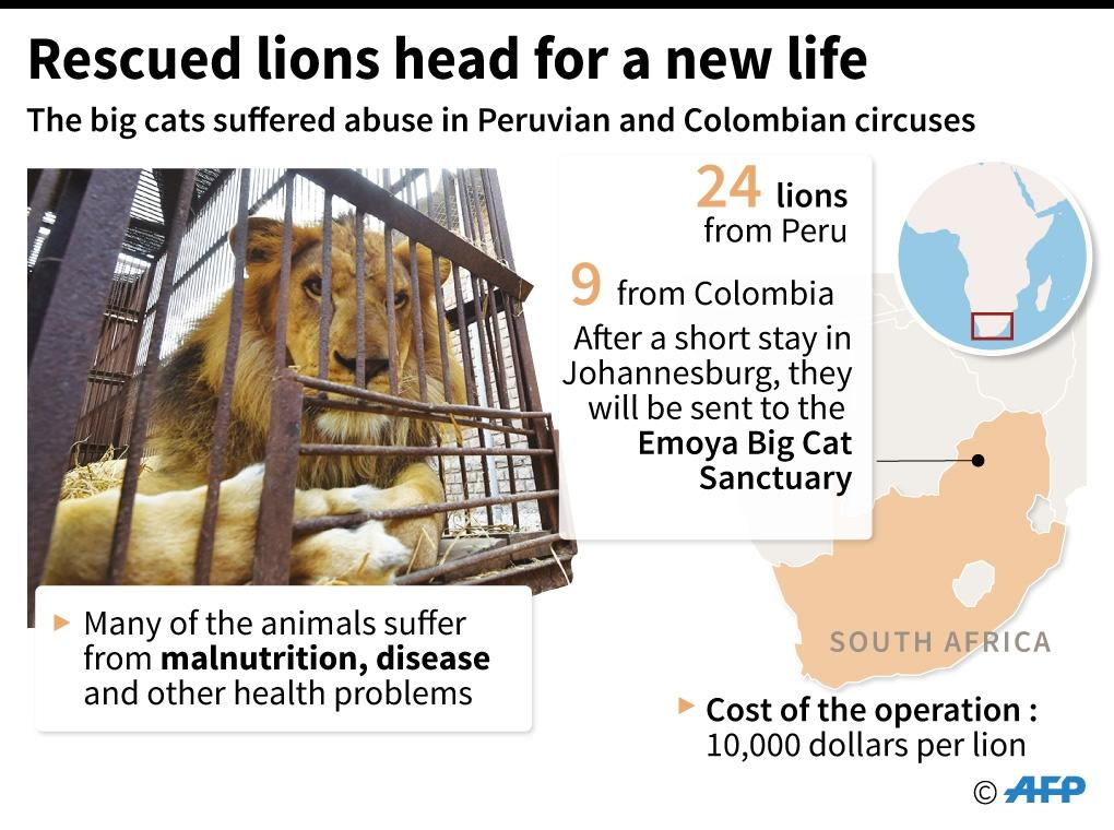 Graphic, including map, illustrating how lions from circuses in Peru and Colombia are to be released into a game park in South Africa (AFP Photo/Tamara Hoha)