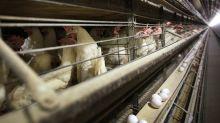 Bird flu egg-splained: The impact goes far beyond your breakfast table