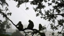 Indische Polizei nimmt Taschendiebe nach Diebestour mit Affen fest