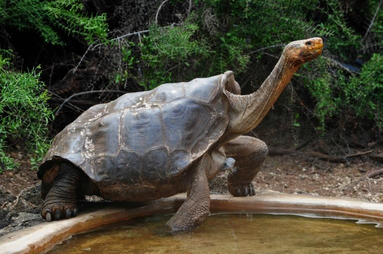 A tortoise in the Galapagos National Park, where visitor sites have reopened after the COVID-19 lockdown