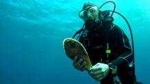 Localizan ocho ejemplares vivos de nacra en Mallorca y en Menorca