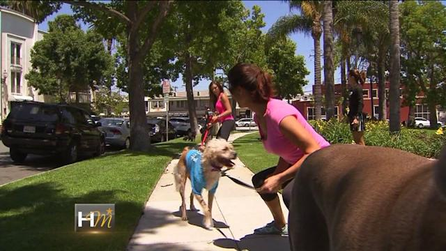 Doggy Boot Camp: How You Can Get Yourself and Your Dog In Shape