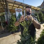 How to buy a live Christmas tree