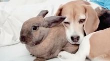 Hündin und Kaninchen sind beste Freundinnen