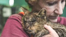 After Being Rescued, All This Mange-Covered Cat Wanted Was a Hug