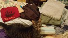 No creía que el gato robaba objetos de la cocina… hasta que lo grabaron