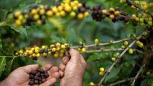 Café especial brasileiro, um mercado em plena expansão