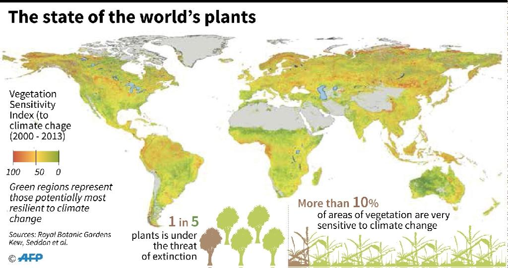 There are a total of 390,900 plants, according to a study by Kew Gardens (AFP Photo/)