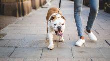 Coronavirus: cómo pasear a tu perro de forma responsable