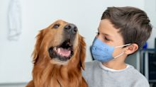 How COVID-19 has accelerated a 20-year surge in demand for pets