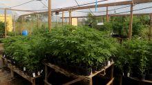 Cannabis industry veteran 'Big Mike' talks pot stocks
