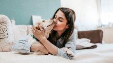 Por qué no se recomienda besar a las mascotas en la boca