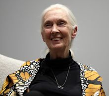 Donald Trump Is Like an Aggressive Chimp and May Not Last Long as President, Says Famous Primatologist Jane Goodall