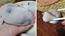If you can't own a hamster, there is always an alternative – mochi