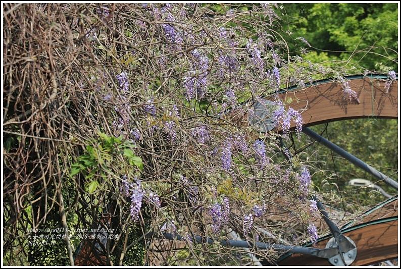 陽明山櫻花季(紫藤)-2018-03-09.jpg