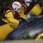 Hopes fade for minke whale stuck in River Thames near London