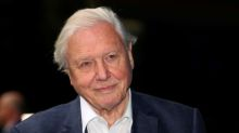 The joy of birdsong graces David Attenborough's lockdown