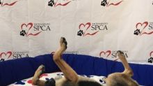 "Taylor Morrison is Helping Shelter Pets Find ""Fur""ever Homes in 2018"