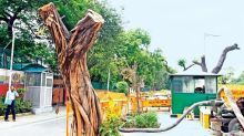 Delhi tree felling: Better stop now than later, says HC