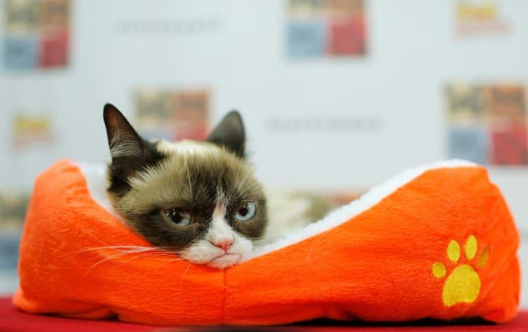 Internet star Grumpy Cat dies at age of seven