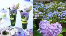 紫陽花季來了!伊藤久右衛門限定仙氣甜點+三大關西賞花熱點
